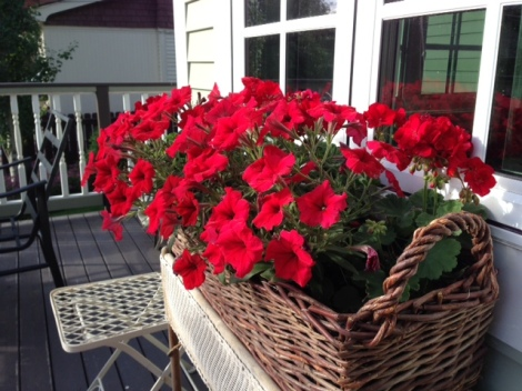 I love red petunias. They are so cheerful and make a strong visual statement.