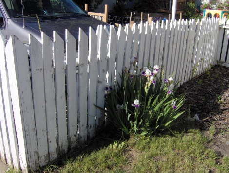 Picket fences have always been popular in historic neighbourhoods.