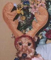Yikes - that's me wearing reindeer antlers.
