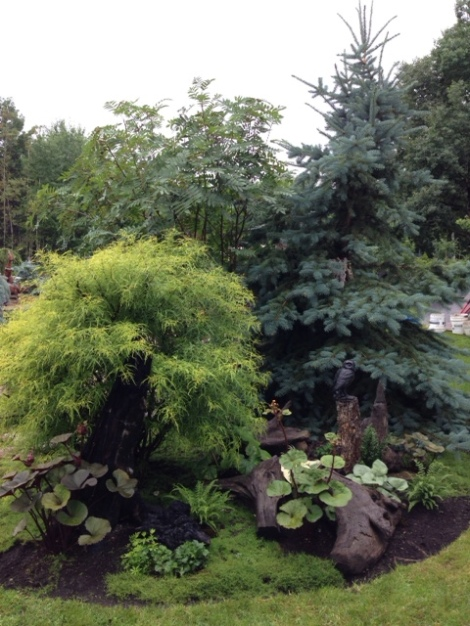 The trees create vignettes and add height to the garden