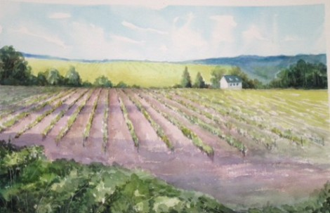 A vineyard in the Loire Valley of France.
